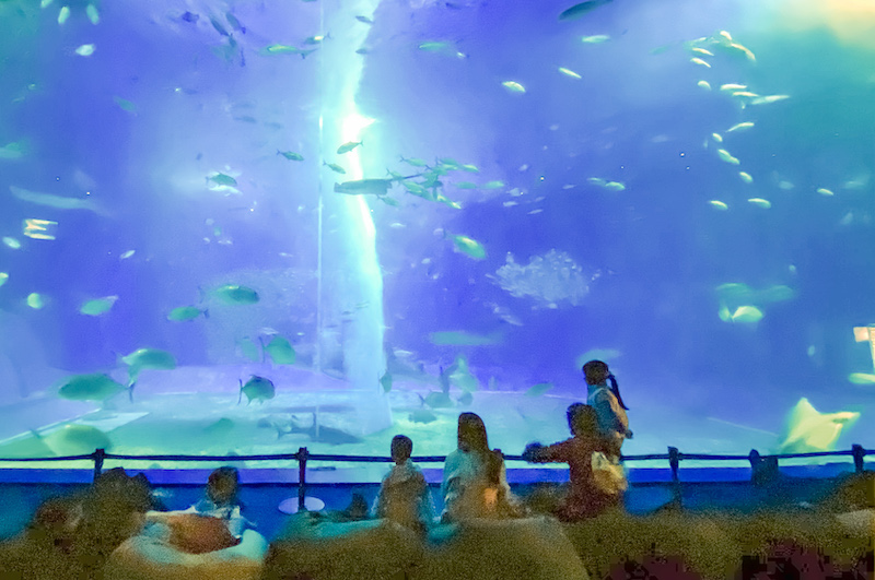 在大水族缸前悠閒地欣賞美麗的海底世界