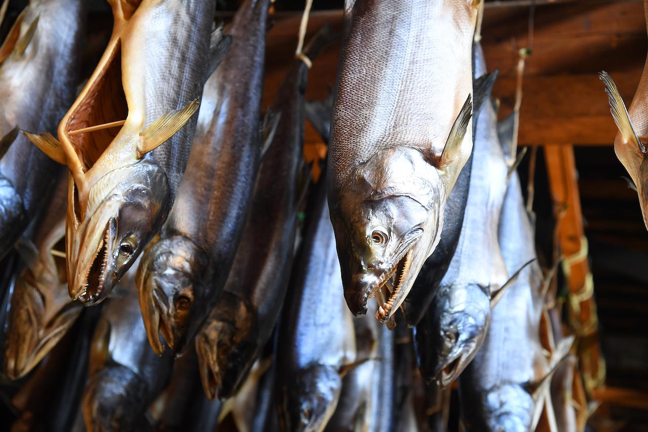 近看可以看的出來鮭魚面目兇惡的模樣