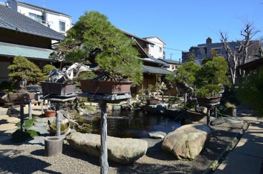 Kunio Kobayashi world-famous Bonsai master 3