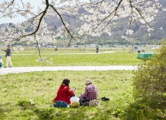 Kitakami family time cherry blossom viewing