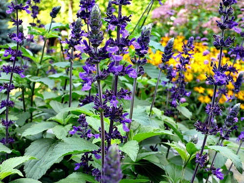 Low maintenance plants key to easy care landscaping for Easy to maintain flowers and plants