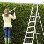 03_18-hedge-with-woman-clipping