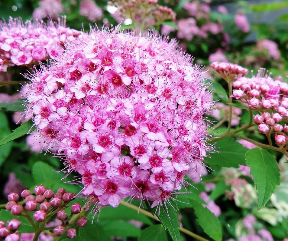Atrayendo Colibríes y Mariposas a Su Jardín - Networx