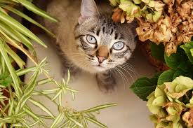 cat repellent for garden. Cats In The Garden Seem To Be An Issue This Week While Helping Customers At Center Week, So Let\u0027s Cover Subject Detail. Cat Repellent For