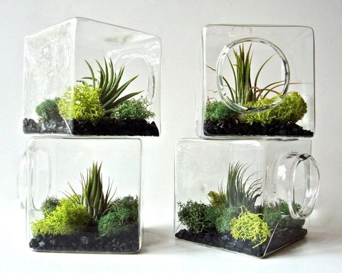 Air plants are green unique low maintenance watters for Low maintenance green plants