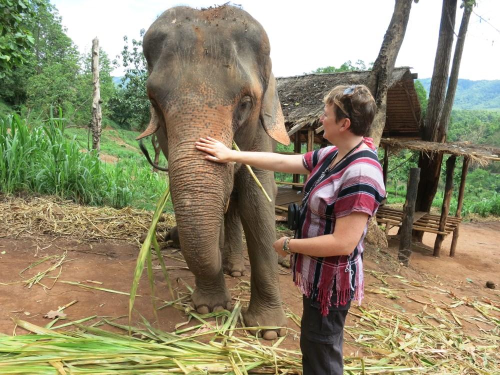 Elephant Tears – learning why elephants cry (3/4)