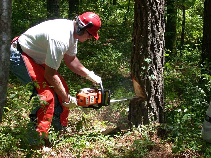 Man holds chainsaw in forest