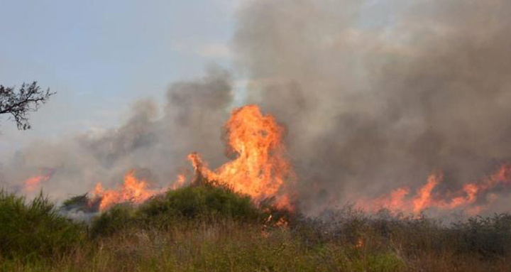 Karmia Nature Reserve Fire. Source ynetnews