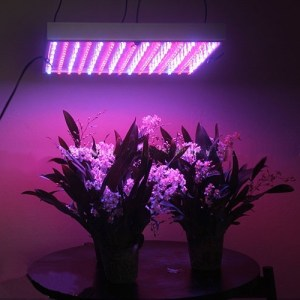 LED grow lights with two potted plants