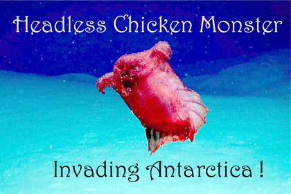 Headless Chicken Monster Invades Antarctic | Watts Up With That?