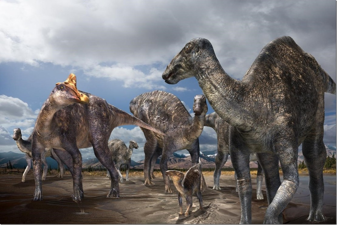 Paleontologists from Hokkaido University in Japan, in cooperation with paleontologists from the Perot Museum of Nature and Science in Dallas, Texas, have discovered the first-confirmed occurrence of a lambeosaurine (crested 'duck-billed' dinosaur) from the Arctic - part of the skull of a lambeosaurine dinosaur from the Liscomb Bonebed (71-68 Ma) found on Alaska's North Slope. The discovery proves for the first time that lambeosaurines inhabited the Arctic during the Late Cretaceous. See paper in Scientific Reports. Credit - Illustration by Masato Hattori
