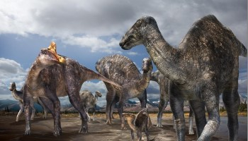6973b10acd First-confirmed occurrence of a lambeosaurine dinosaur found on Alaska's  North Slope