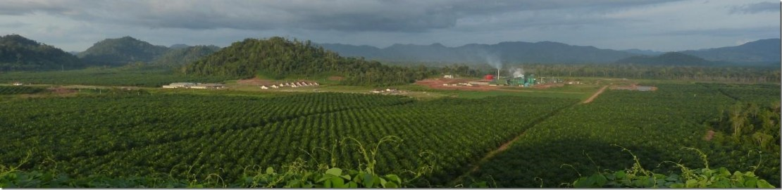 IMAGE: The view of an oil palm plantation in Indonesia. Credit: Douglas Sheil
