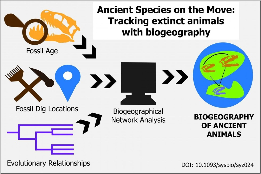 By combining data from fossils and models of the ancient Earth, researchers can map where ancient species may have migrated. This method, called biogeographical network analysis, converts evolutionary relationships between species into geographical relationships. This method was used in research by Tai Kubo, Ph.D., a postdoctoral researcher affiliated with the University Museum at the University of Tokyo. Credit Caitlin Devor, The University of Tokyo, CC-BY Usage Restrictions Image by Caitlin Devor, The University of Tokyo, CC-BY