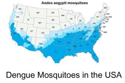 featured_image_dengue