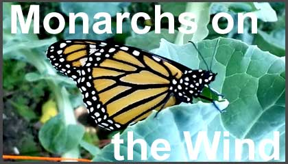 Butterfly Release 2020 Fair Lawn Nj.Monarch Migration 2019 Watts Up With That
