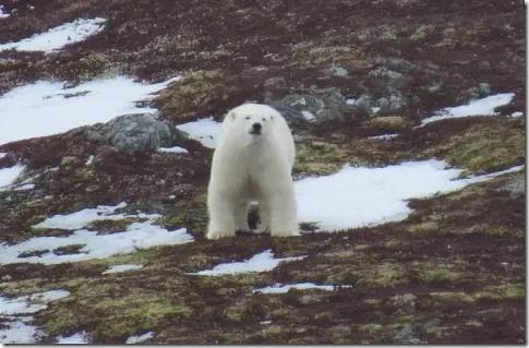 np-polarbearsighting-2018-6_large