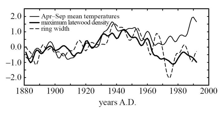 Tree ring width and wood density vs temperature