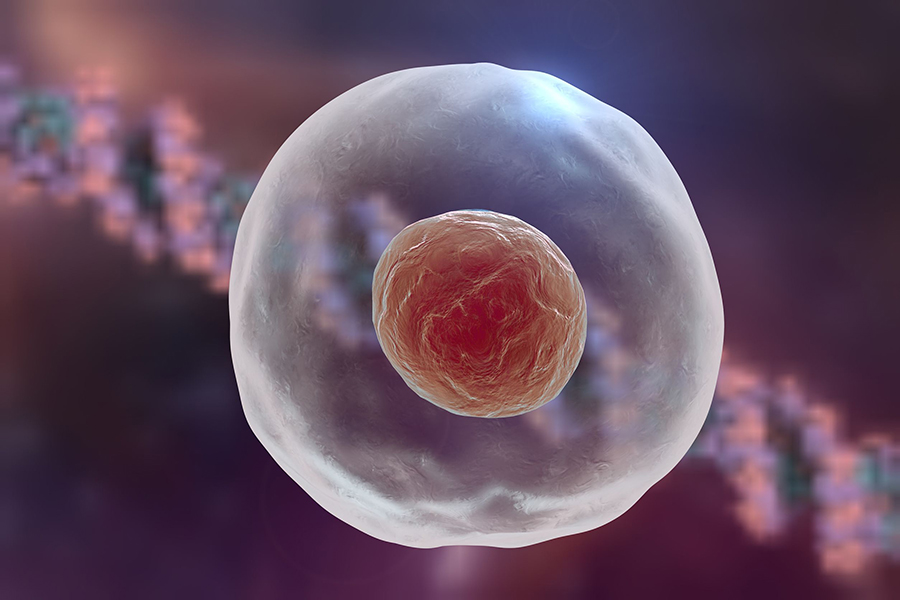 The Eukaryotic Nucleus May Derive from a Giant Virus