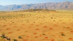 grass fractal dots at edge of desert.jpg