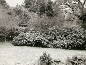 snow brittany April 2021.png