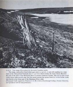 tree-stump-climate.jpg