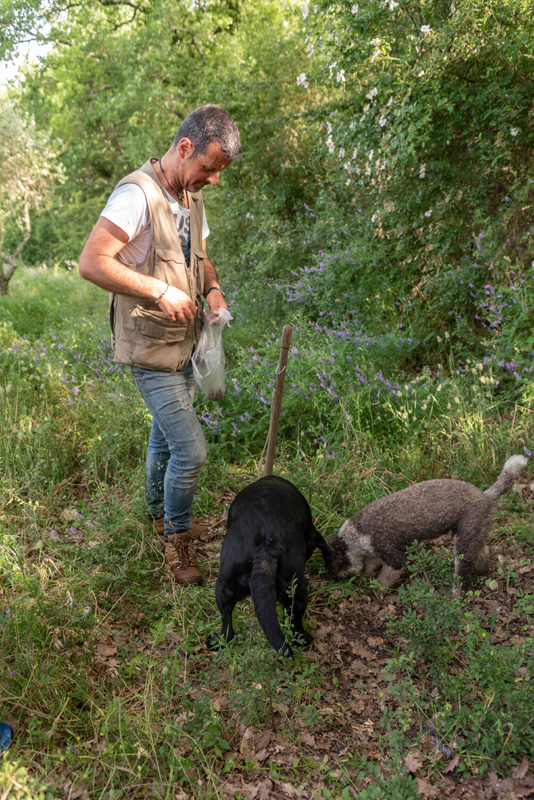 The truffle hunting dogs are rewarded with treats when they sniff out a truffle.