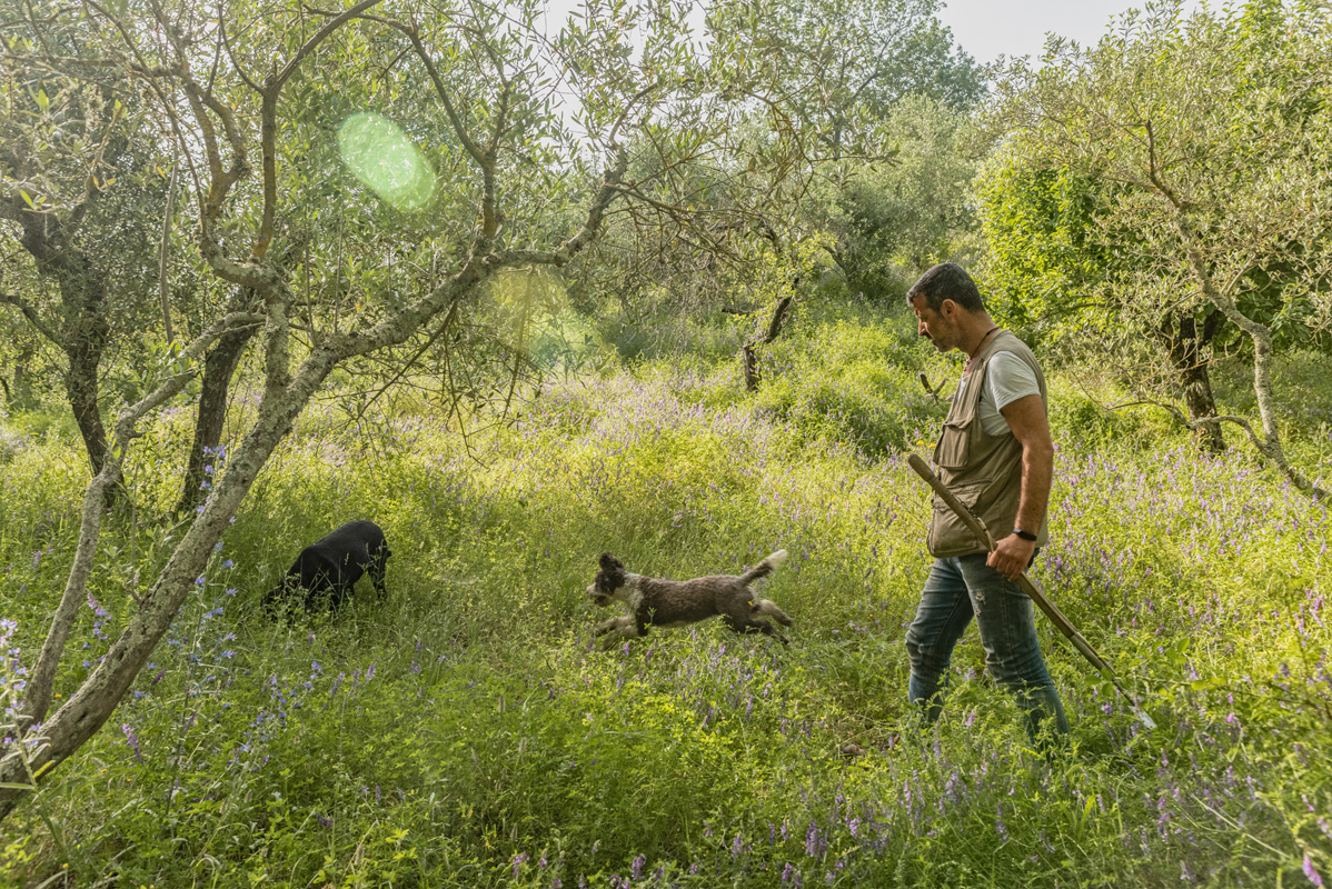 Truffle hunting in Tuscany with Alessandro from Siena Tartfufi