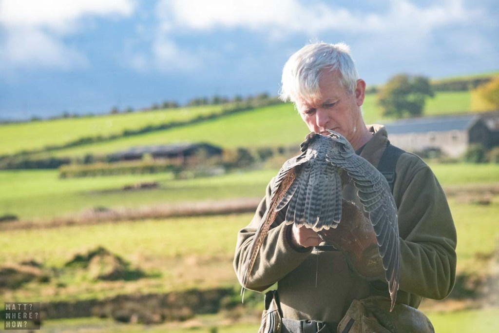 The Huntly Falconry Centre gives you hands on experiences with falcons and owls.