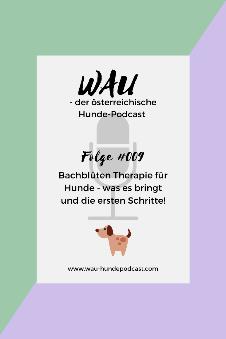 bachblueten-therapie-fuer-hunde-podcast