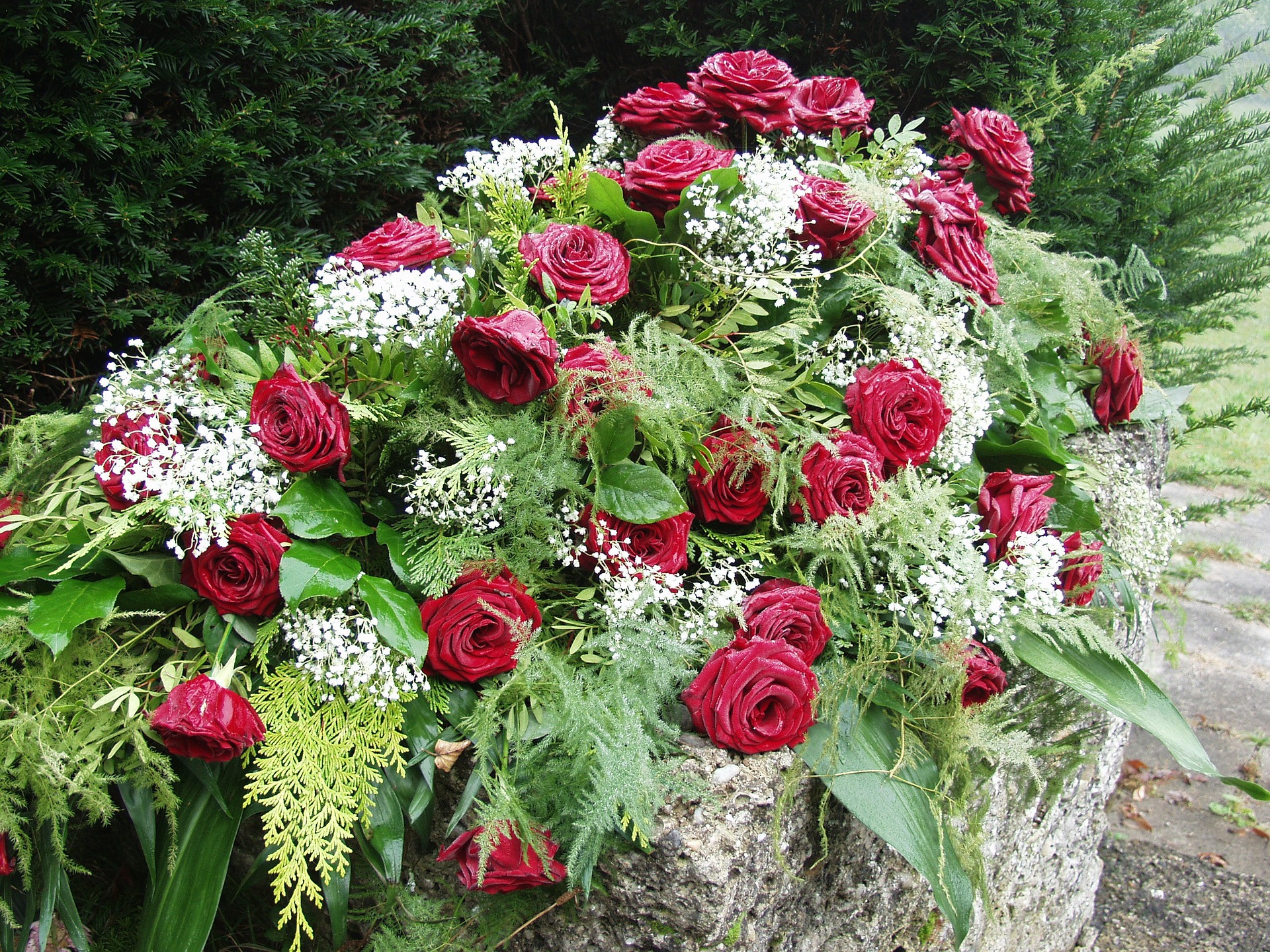 roses 61203 1920 jpg?fit=1920,1440&ssl=1.'
