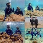 snorkeling&diving