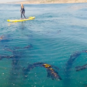 a young woman laughs while paddling a yellow SUP at a kelp forest in Malibu.