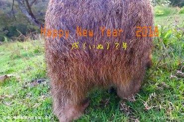 2018年は、ウォンバットの逆襲で開運(ウン)?