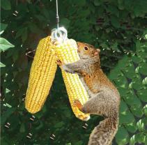 squirrel-bungee-cord-feeder-1898