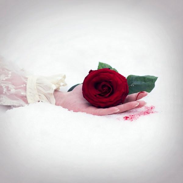 Róża2m