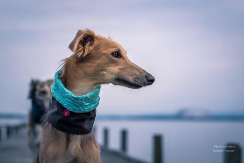 Hundeloop mit Stil