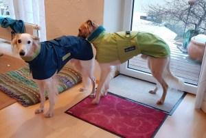 Finni und Filou mit ihren neuen Hundemänteln