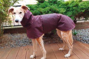 Hundemantel aus gewachster Baumwolle