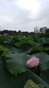 These Lotus were huge