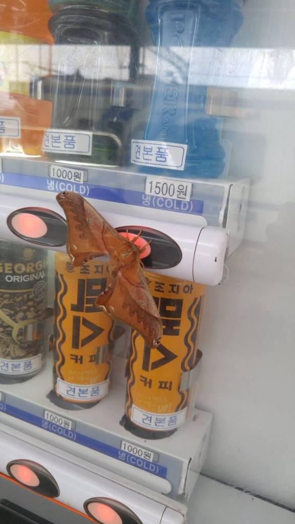 Getting anything from a vending machine at Gapyeong station needed to be aware of other little critters on the machines