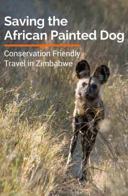 Travel to Hwange National Park in Zimbabwe and participate in the conservation of the endangered African Painted Dog