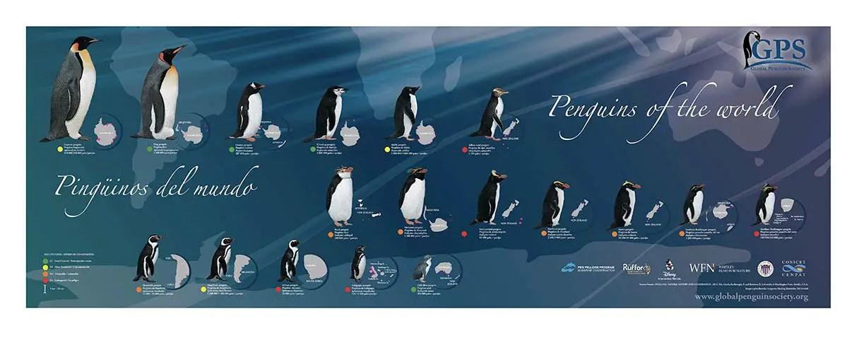 Global Penguin Society world Penguiins
