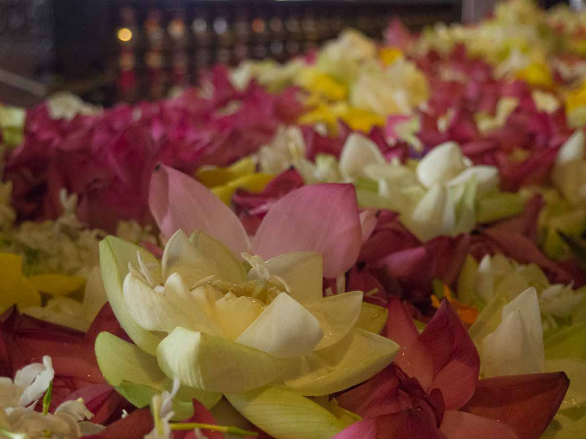 Flowers at the Buddha Tooth Relic Kandy Sri Lanka
