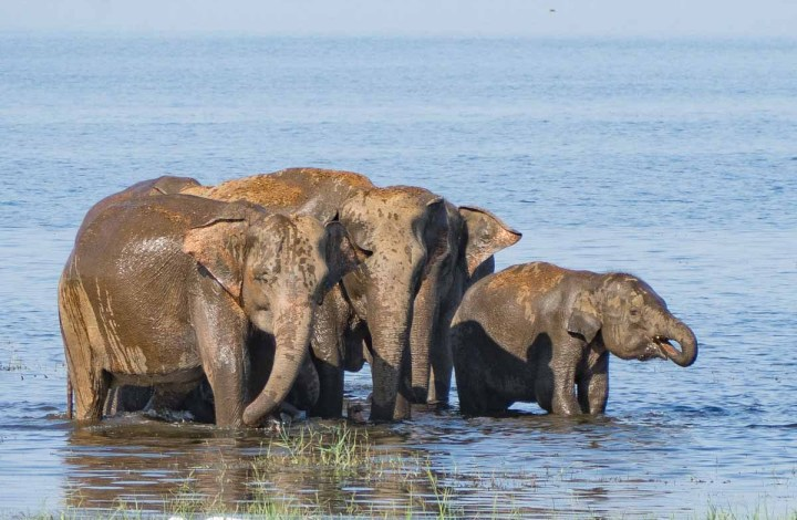 Your Sri Lanka Wildlife Itinerary: Five Places Not to Miss