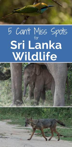 Sri Lanka Wildlife 5 places to visit
