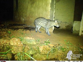 Fishing Cats night scene