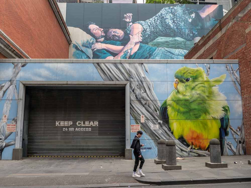 Dvate mural in Melbourne. Green and yellow bird with Fintan Magee mural above