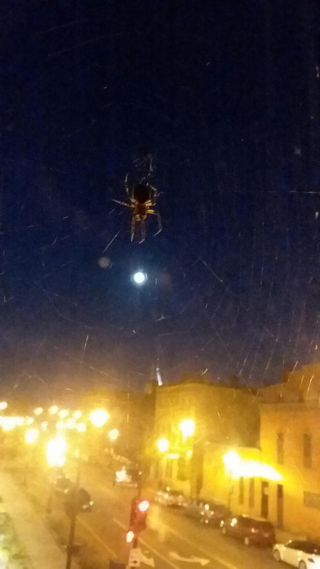spider in web in a window overlooking a downtown city street