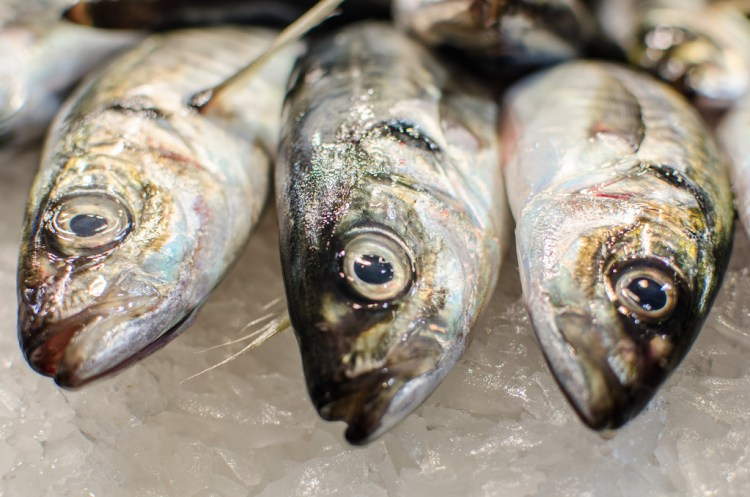 03farmfish